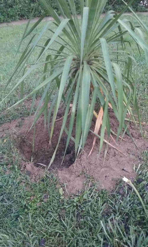 Los v ndalos atacan los jardines de haro for Jardines de azahar rioja