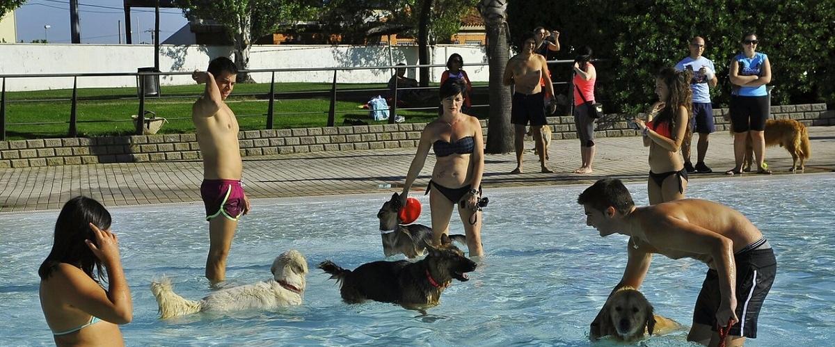 Al agua perros for Piscinas perros