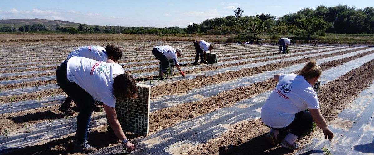 Proyecto cultivo tomate